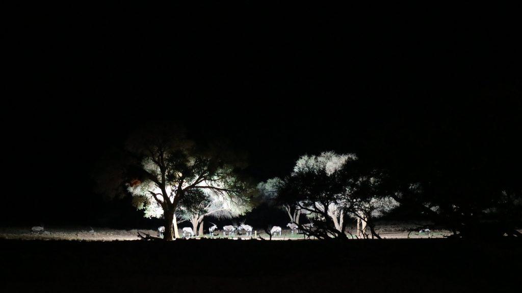 Vilda djur under träd