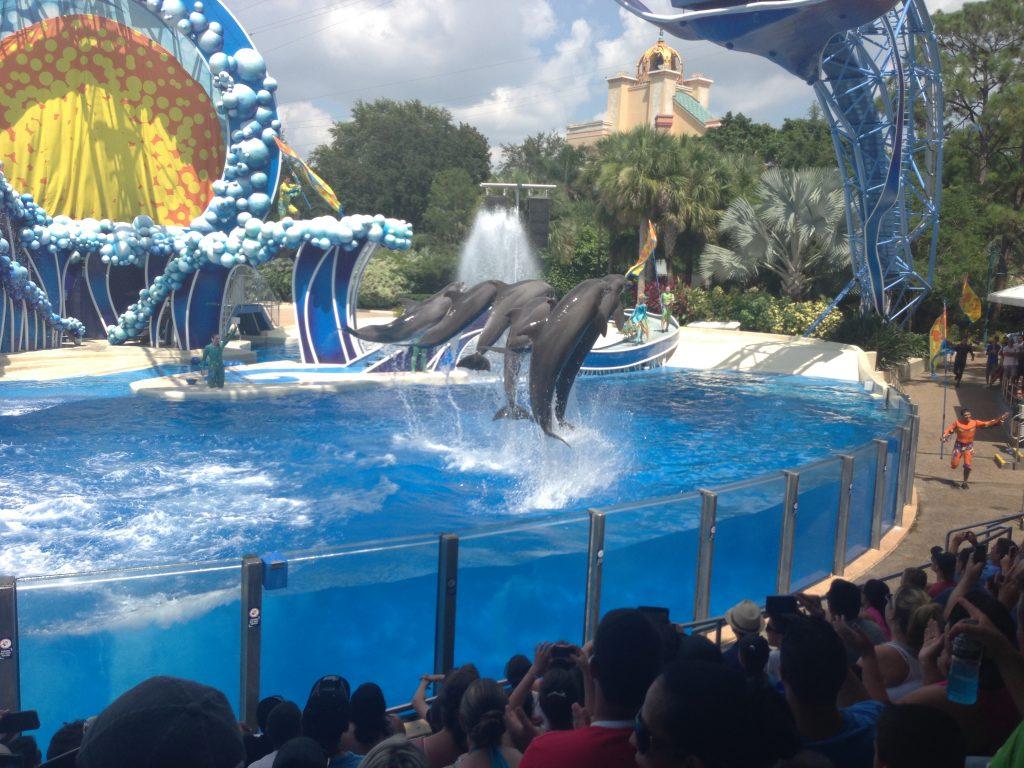 Simma med delfiner nackdelar