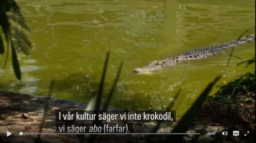 krokodiler på östtimor
