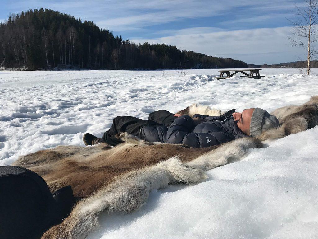 Sova i träd på Granö Beckasin i Västerbotten