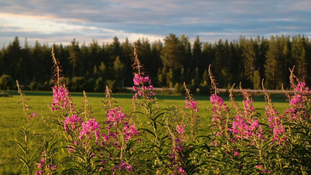 Tväråbäck Västerbotten